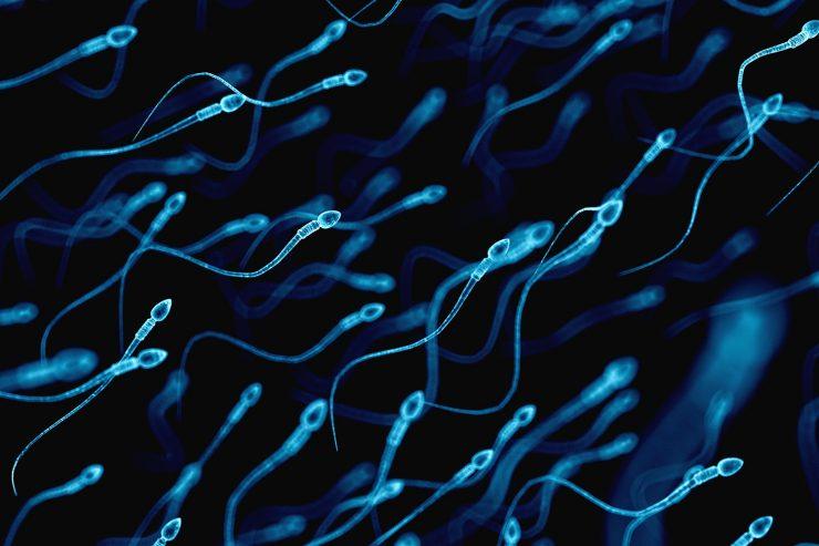 Hoy en nuestro blog de infertilidad te lo contamos todo sobre la inseminacion artificial, que es, tipos de inseminacion artificial y la tasa de exito de esta tecnica de reproduccion asistida IFER Mallorca